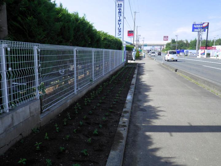 20200616花壇2
